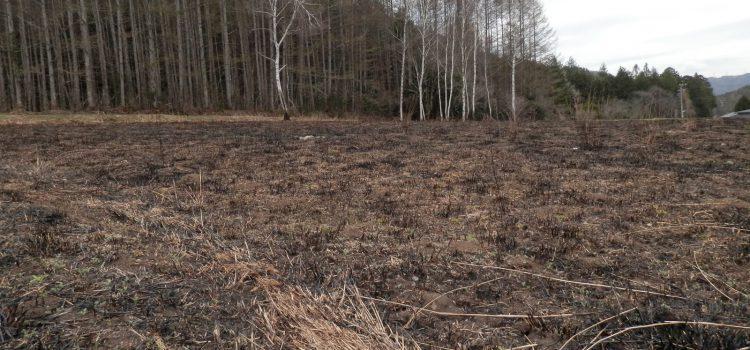 今年も野焼きが終わりました。