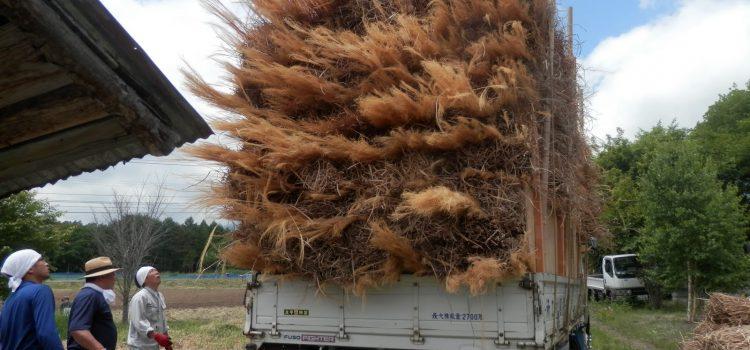 茅材の運搬です。